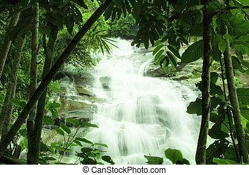 watervallen, bos, groene