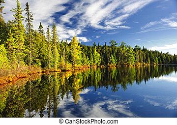weerspiegelen, meer bos