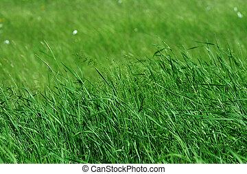 wei, gras, groene, groot
