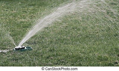 wei, watering, groene, sprinkler