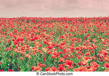 weide, bloemen, lente