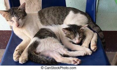 weinig moeder, kat, slapende