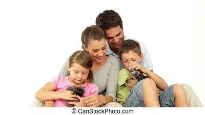 weinig; niet zo(veel), grijze , schattig, katje, gezin