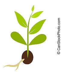 weinig; niet zo(veel), vector, morphology., -, plant, illustratie, zaad, groeiende
