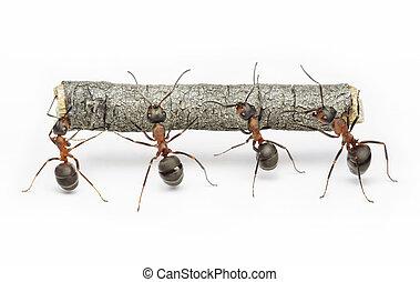 werken, mieren, teamwork, logboek, team