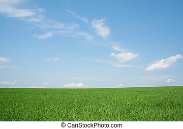 wheaten, akker, landscape