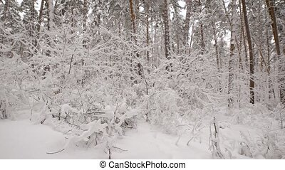 wij, bepalen, takjes, because, bos, alles, struiken, nee, snow-covered, zien, bomen, onder, namen, hebben, gebladerte, bijna, vegetatie, groenteblik, takken, winter, onmogelijk, however