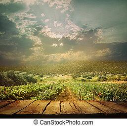 wijngaard, achtergrond