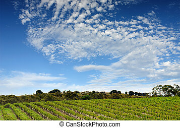wijngaard, australiër, landscape