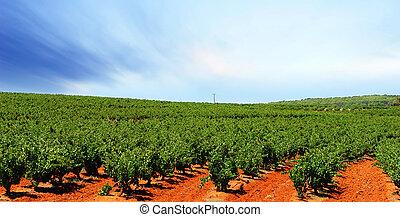 wijngaard, barossa