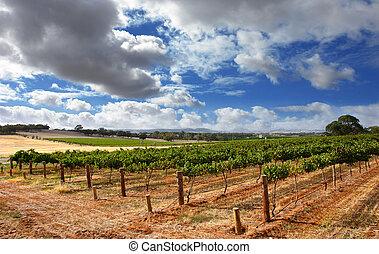 wijngaard, bewolkt