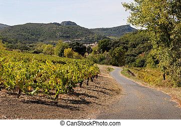 wijngaard, plattelandsweg