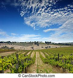 wijngaard, zomer, landscape