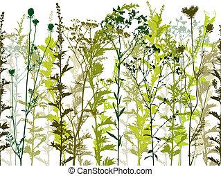 wild, planten, natuurlijke , weeds.