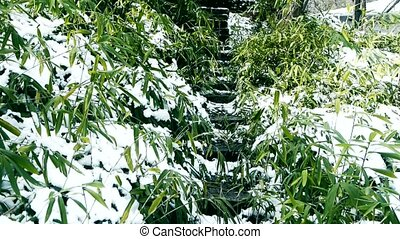 wind, bedekt, slingeren, sneeuw, bamboe