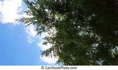 wind, takken, onder, blauwe , het slingeren, sky., boompje, wilg