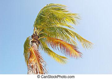 winderig, palm