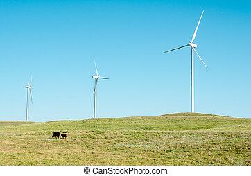 windmolen, grazen, op, toren, vee