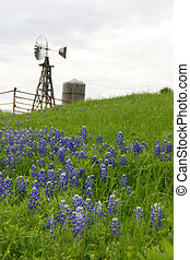 windmolen, helling, bluebonnets, texas