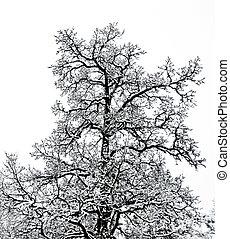 winter., boompje