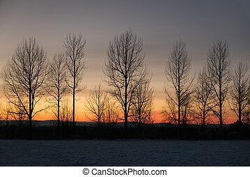 winter, hemel, bomen, blote, tegen, ondergaande zon , roeien