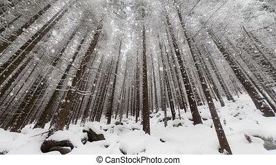 winter, kerstmis, achtergrond, jaar, nieuw
