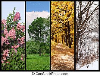 winter, lente, collage, herfst, bomen, quatres saisons, grens, zomer