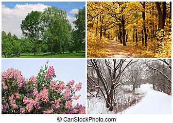 winter, lente, collage, herfst, bomen, quatres saisons, witte , randjes, zomer