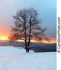 winter natuur, -, boom landschap, alleen, zonopkomst