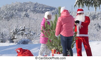 winter, stamboom, sneeuw, verfraait, bos, bedekt, kerstmis