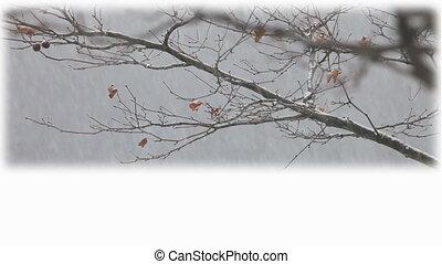 winter, titel, schaaltje