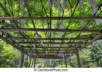wisteria, bloem, tuin, portland, japanner