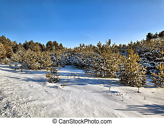wit-rusland, hout, winter, zonne, dag