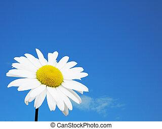 witte bloem, hemel