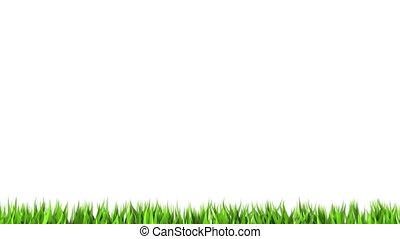 witte , gras, groene, achtergrond.