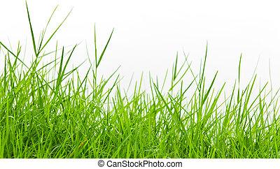 witte , gras, groene achtergrond
