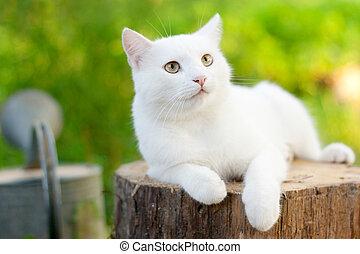 witte , tuin, kat