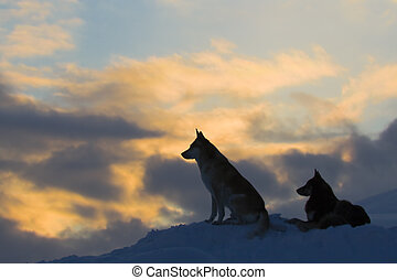 wolves, (dogs), silhouettes, twee