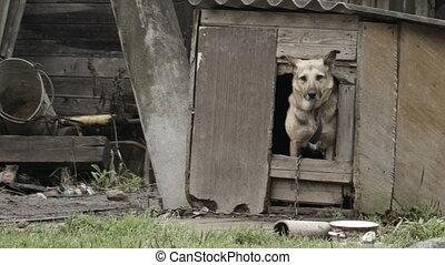 woning, het gluren, dog, uit