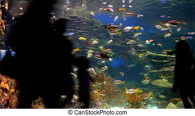 wrakkigheid, aquarium, tijd