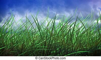 wrakkigheid, gras, hemel, tijd