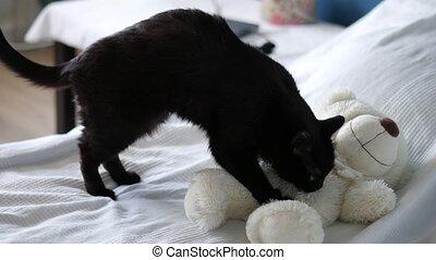 zacht, uhd, zoned, speelbal, het kneden, beer, kat, zalig, black , 4k, totaal, 2160p, uit