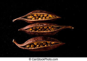 zaden, close-up, fruit