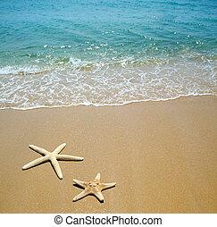 zand strand, zeester
