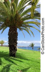 zee, verticaal, bomen, oceaan, grass., palm, achtergrond, groene, video., of