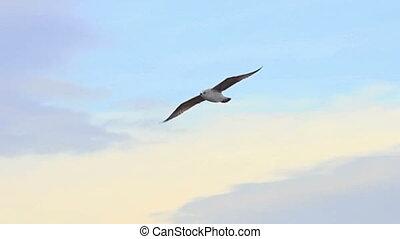 zeevogel, vlucht