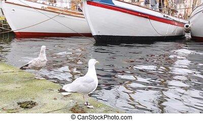 zeilend, seagulls, twee, stander, bootjes, witte , pijler