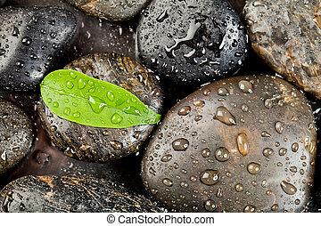 zen, freshplant, stenen, druppels, water