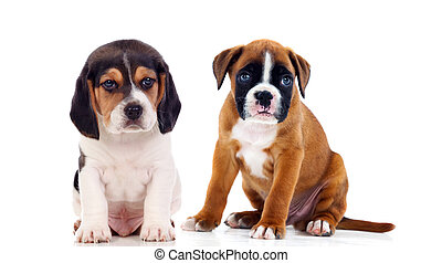 zittende , vloer, hondjes, zoet, twee