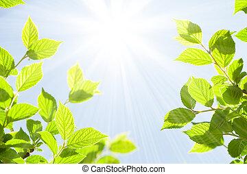 zomer, abstract, zonnig, bokeh, groene achtergrond, bladeren